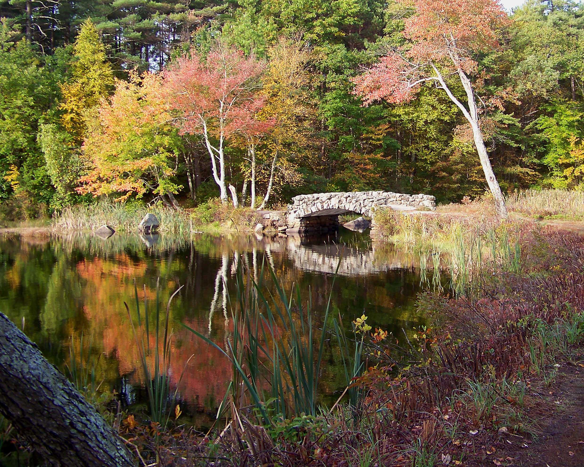 judy-belben-Rustic Bridge-Hopedale Parklands - OK