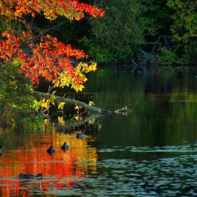 Autumn_Brierly - OK Fall