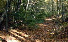 limerock-preserve