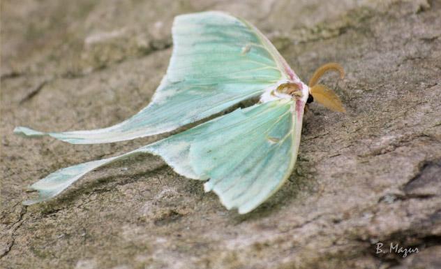 Gearheads-outside-luna-moth