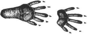 Gearheads-outside-racoon-tracks