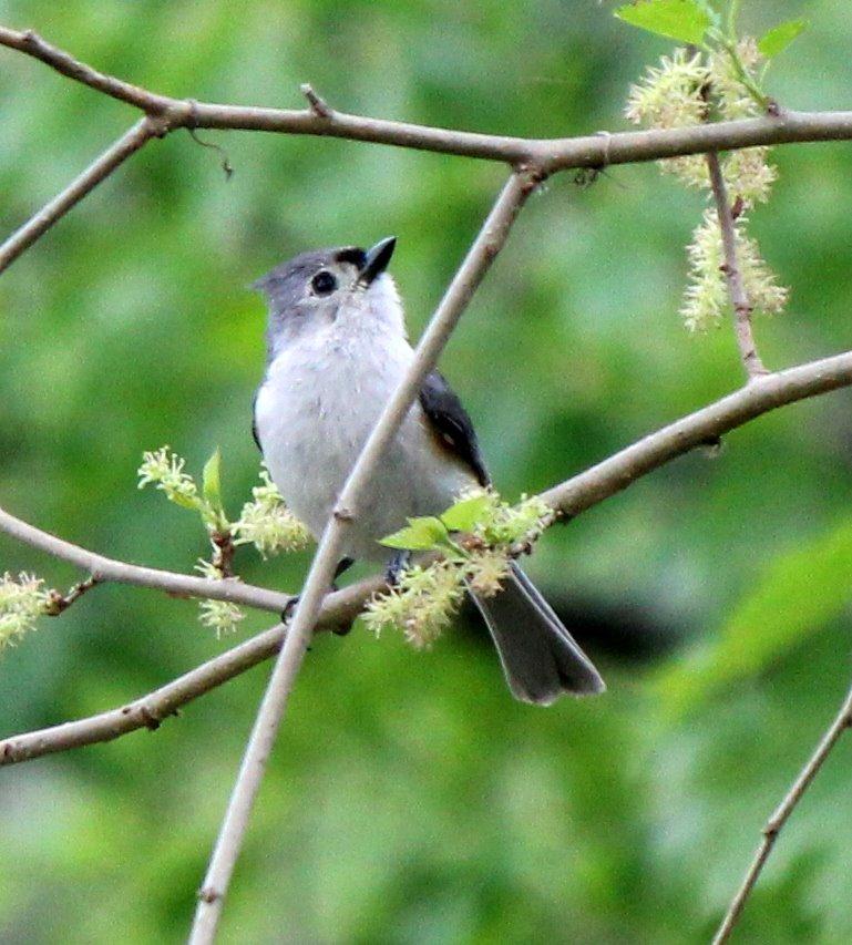 Birding the Blackstone - Bird Walk at River Bend Farm