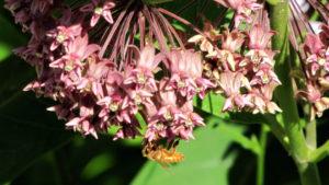 Pollinator Open House