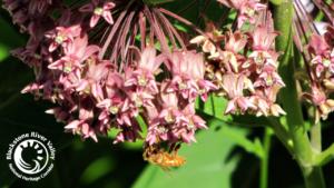Bee day newsletter header