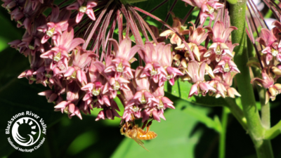 Bee day newsletter header